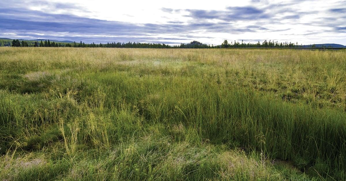 selling land prepare it
