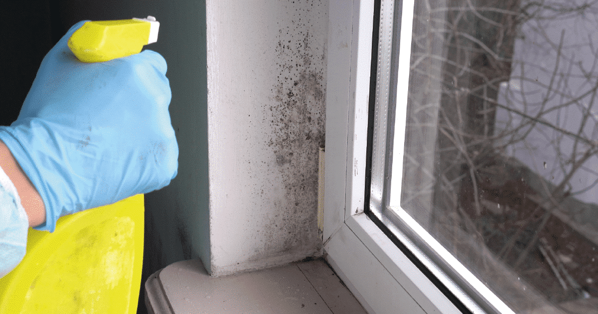 removing mould in the house
